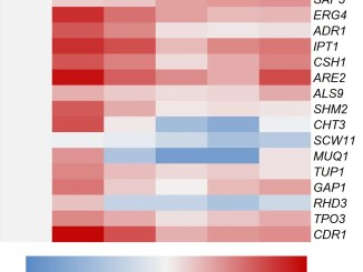 Heat map of genes detected by quantitative reverse transcription PCR (RT-qPCR). The heat map illustrates that the 15 selected deferentially expressed genes were in accordance with the results of gene chip and differential gene expression tendency analyses. The rows represent genes and the columns represent replicates of each time points. Blue indicates downregulation, red upregulation, and white indicates the gene expression of Candida albicans before infection.