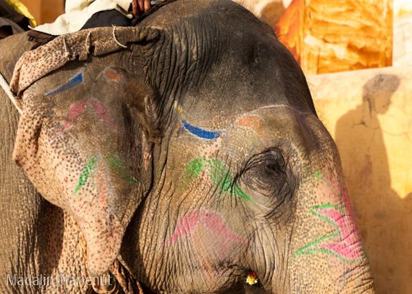 Amber Fort, plimbarea cu elefantul pictat. Oraș JAIPUR (PINK CITY).