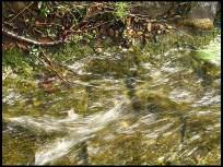 Nit (potok)