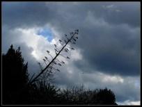 Agave lete u nebo