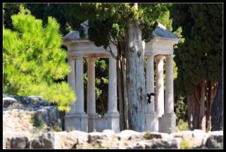 Plahi domaćin drevna parka