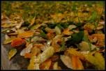 Rosne vlati trave i suho lisje
