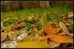 Rosne vlati trave