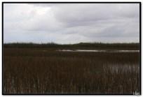 Everglades - vožnja močvarom