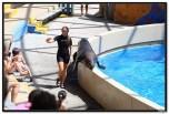 Tuljani i morževi