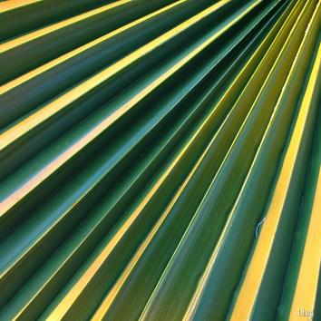 List palme