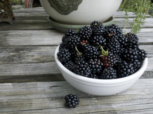 Resultado de imagen para blackberry health benefits
