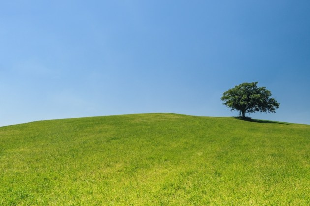 hill-meadow-tree-green-large