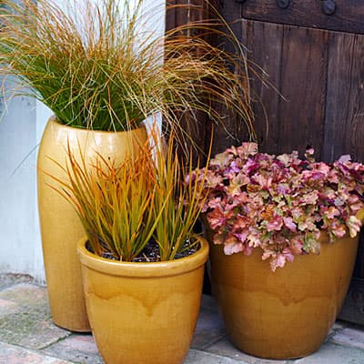 fall potted plants