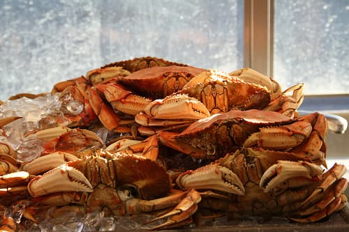 San Francisco Dungennes Crabs