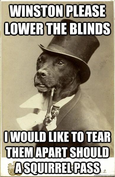 Dog tears up blinds