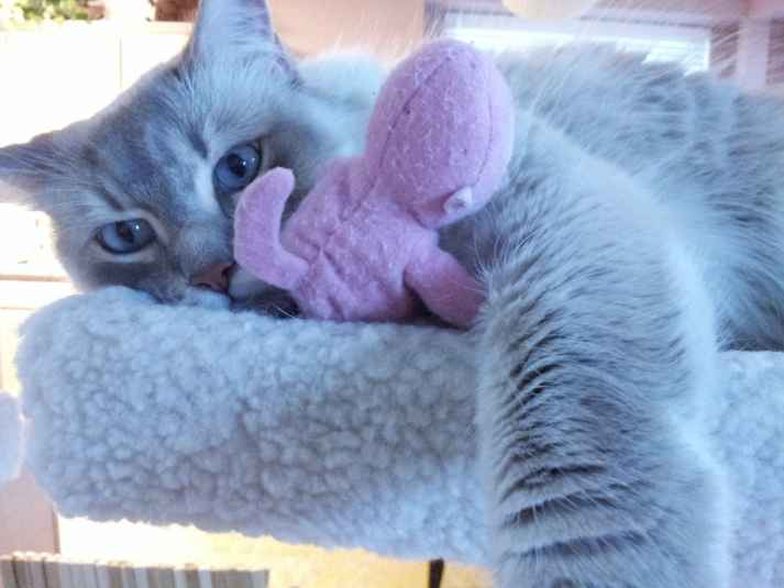 Princess pink monkey
