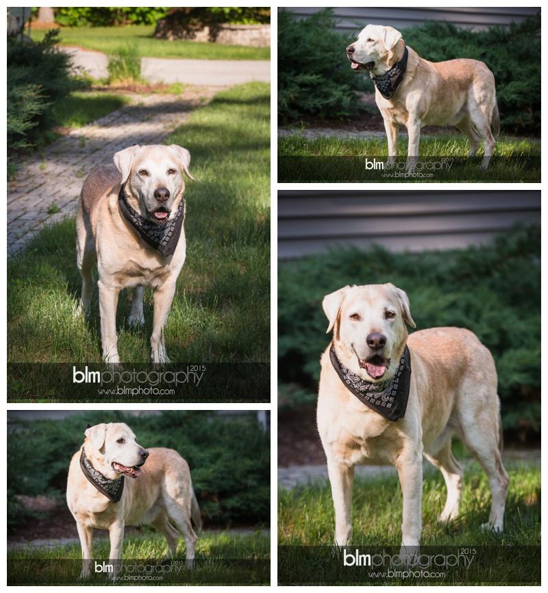 Rachel-Luke-Pet-Photos-061415-4115.jpg