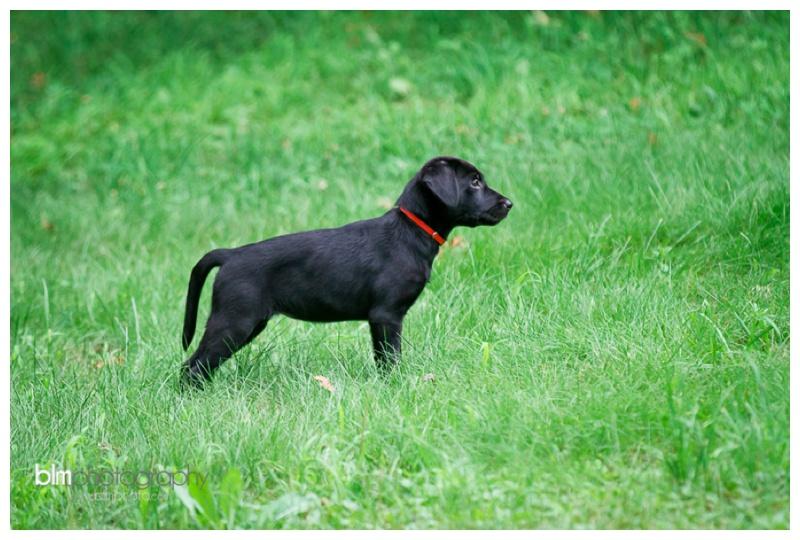 Webber-Puppies_072115-3987.jpg