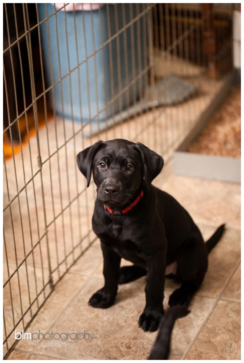 Webber-Puppies_072115-7931.jpg