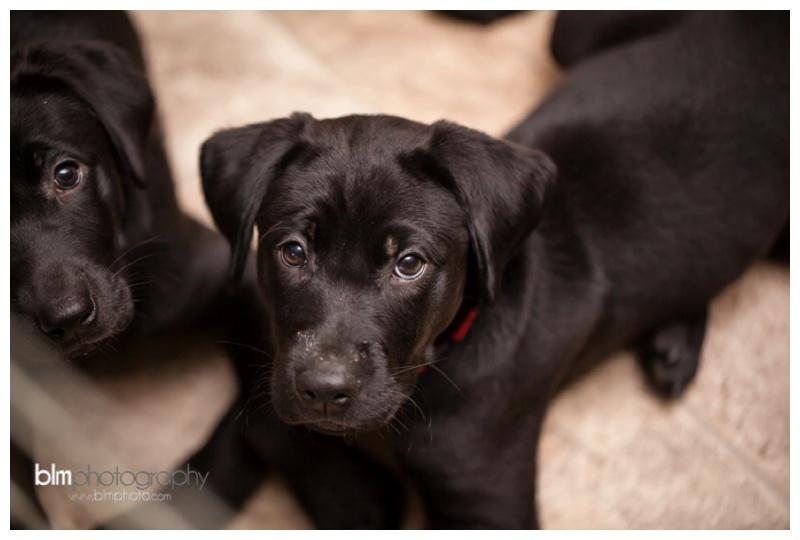 Webber-Puppies_072115-7959.jpg