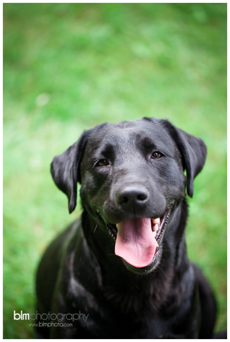 Webber-Puppies_072115-8093.jpg