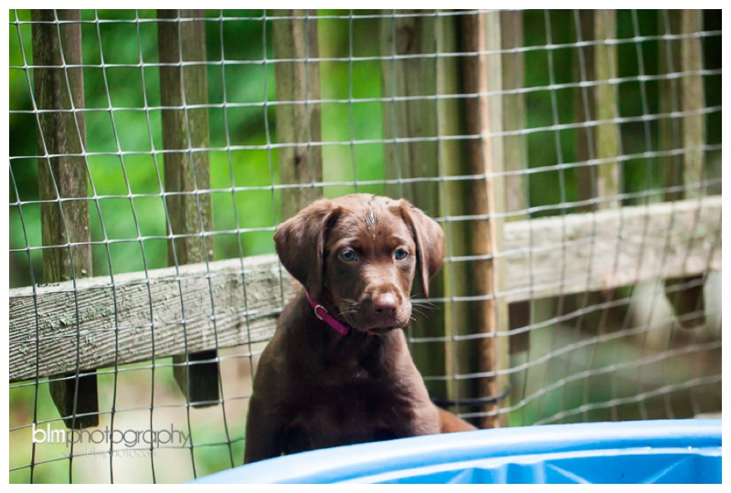 Webber-Puppies_072115-8262.jpg
