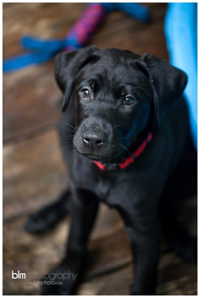 Webber-Puppies_072115-8336.jpg
