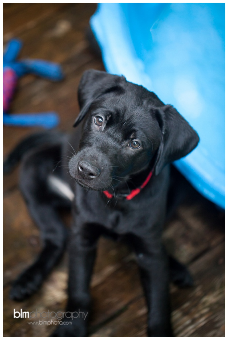 Webber-Puppies_072115-8349.jpg