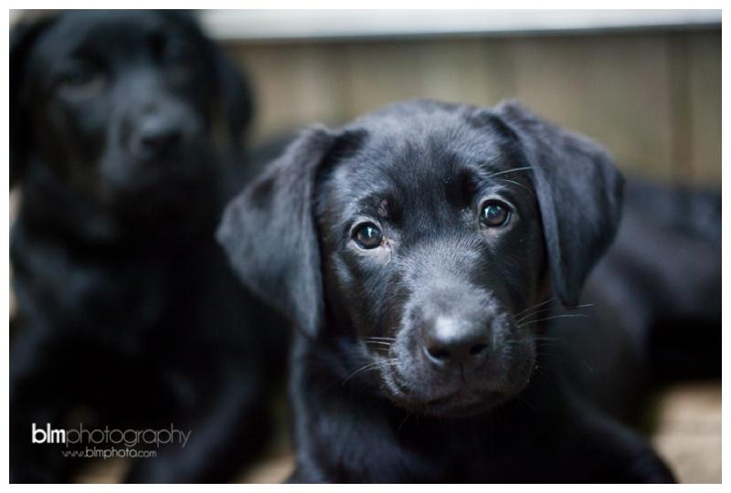 Webber-Puppies_072115-8460.jpg