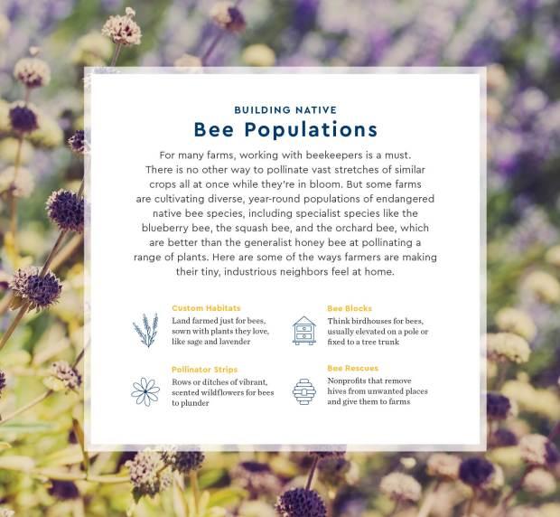 Pollination_Blog_7