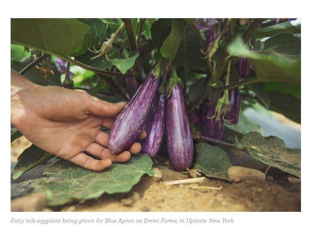 Fairytale-Eggplant-Slices_1