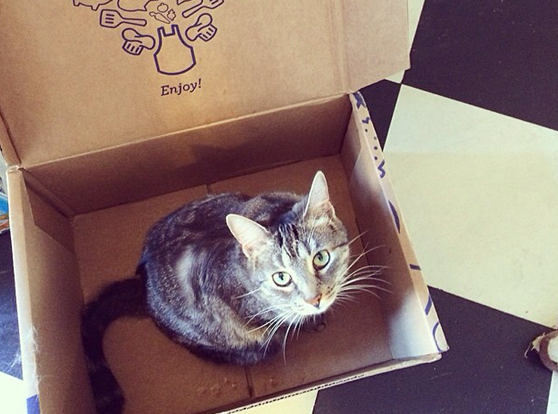 Cat in the box from @sassyandsmiling
