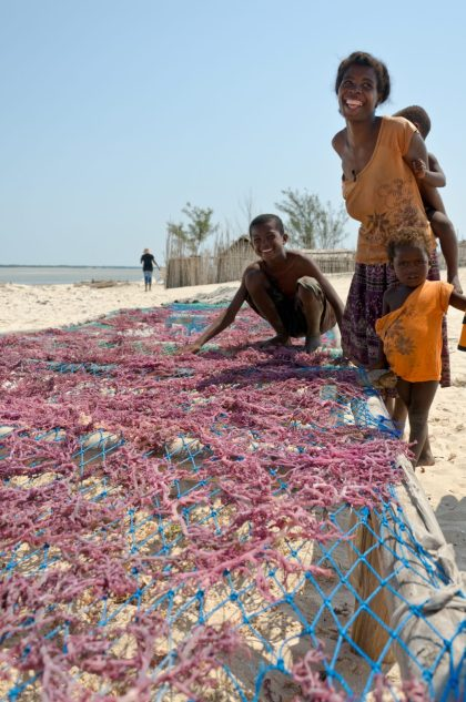 Seaweed Aquaculture