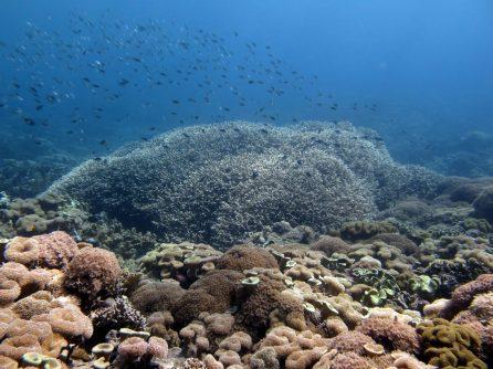 Timor-Leste Reefscape | Photo: Jen Craighill
