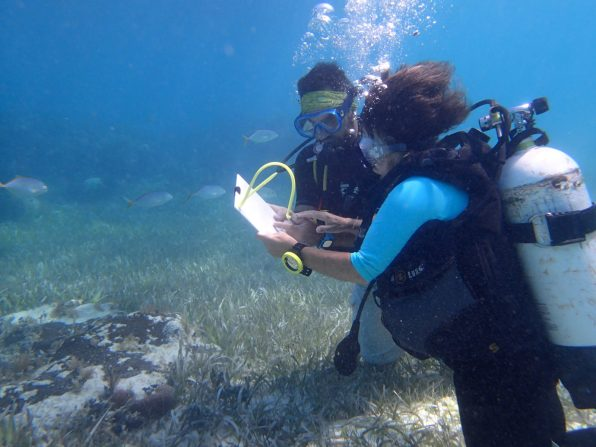 Underwater data collection | Photo: Jane Stephens