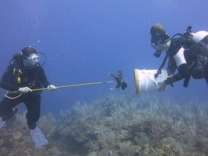 Lionfish cull