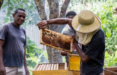 beehive monitoring ankingabe