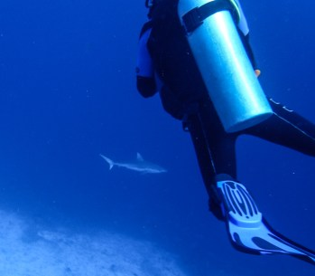 A curious shark approaches the volunteers | Photo: Sassa Jordan