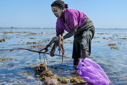 A Vezo woman removes an octopus from her spear | Photo: Barbara Hobi