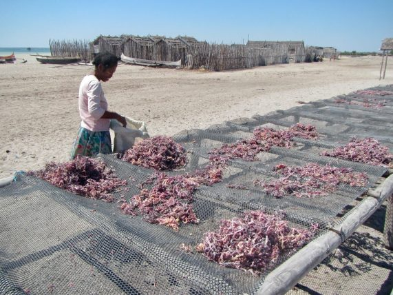 A Vezo woman drying seaweed to prepare it for market
