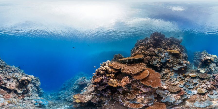 Palau: The Ocean Agency / Christophe Bailhache