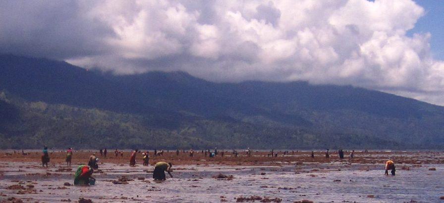 Reef gleaning near Dzindri