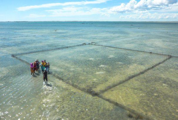 Visiting sea cucumber farms | Photo: MWAMBAO