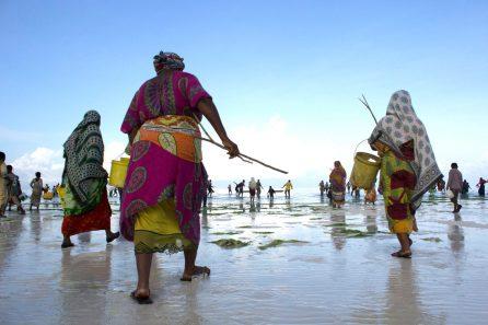 L'ouverture de la pêche au poulpe à Zanzibar après une fermeture temporaire | Photo: Mwambao