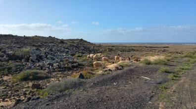 Fuertaventura - rowerowy dzien 2 112