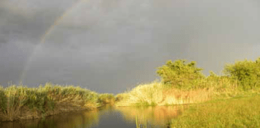 Even during periods of drought, Namibia's Caprivi Strip remains green and lush.