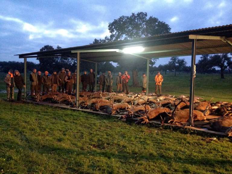 Animals hunted during a monteria hunt
