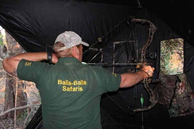 A hunter is aiming a bow from a blind