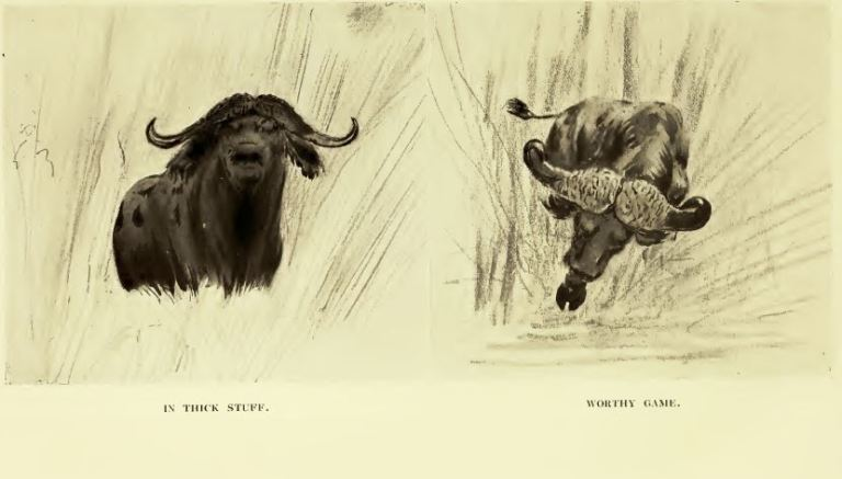 bell_buffalo