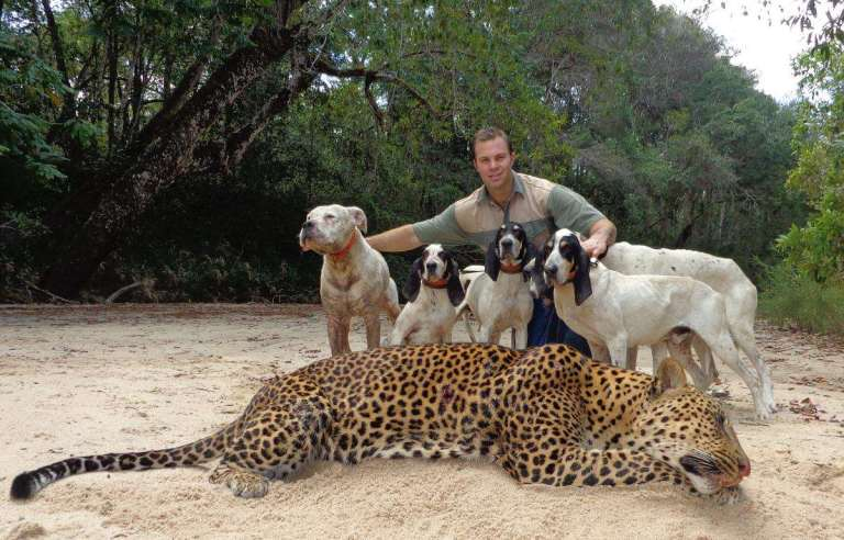 leopard hounds