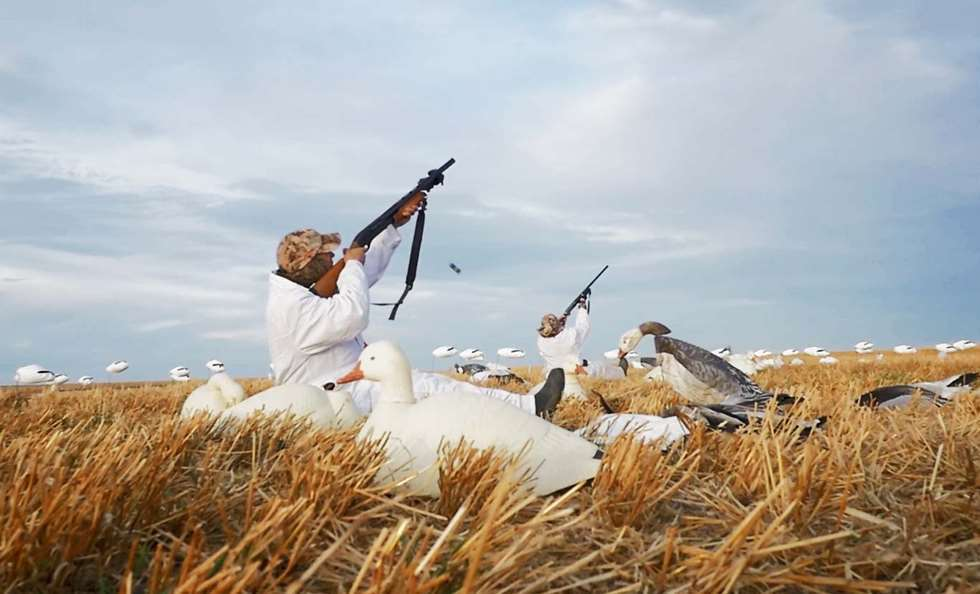 light geese hunting