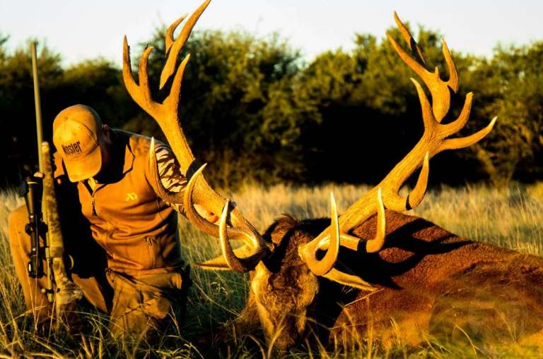 Paying homage to a fallen red stag