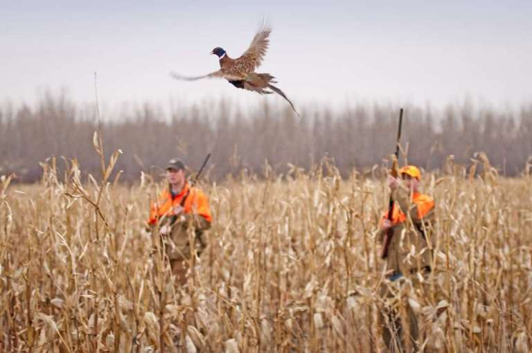 Pheasant hunting in America