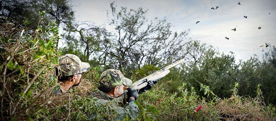 Two hunters shooting doves